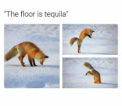 Tequila Meme - fox meme 1 the floor is tequila by agentofthemessiah on deviantart