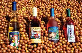 Pumpkin Patch Louisburg Nc by North Carolina Winery U0026 Vineyard Duplin Winery