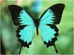 karenina s musings butterfly day butterfly