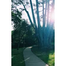with the trees exploring an authentic relationship with