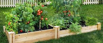 how to start a vegetable garden u2013 how to grow vegetables