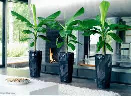 16 best indoor plants images on pinterest indoor house plants