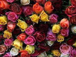 strangers flowers giving flowers to strangers on a busy london beliefnet