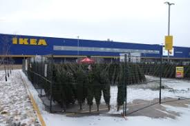 winnipeggers begin search for perfect christmas tree manitoba