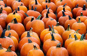 pumpkins for sale why americans go for pumpkin and pumpkin flavored stuff