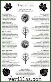 celtic tree astrology eternally a witch celtic
