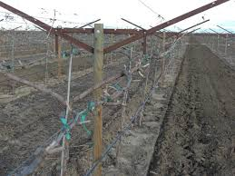 build grape trellis metal stakes for trellising in vineyards and fruit orchards