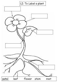 parts of a plant worksheet free worksheets library download and