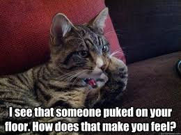 Therapist Meme - just discovered that my cat is a meme meet therapist cat funny