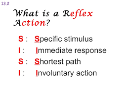 Describe A Reflex Action The Nervous System 2014