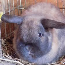 my mini farm my story chickens u0026 rabbits backyard chickens