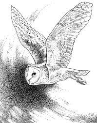pacific horticulture society garden allies raptors