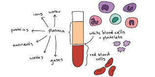 components of blood article khan academy
