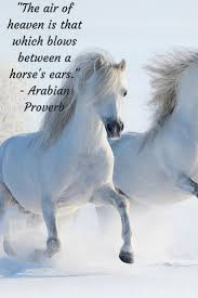 the air of heaven is that which blows between a horse u0027s ears