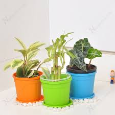 Best Plant For Office Desk Buy Best Table Top Office Desk Plants At Nursery Live