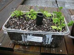 How To Make An Urban Garden - diy alaska grow bucket sub irrigated system sips here is jim