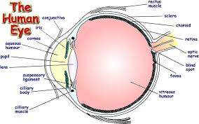 Blind Spot In Eyes Eye Png