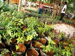 Indore Plants Education Department To Plant 35 Lakh Saplings Indore News