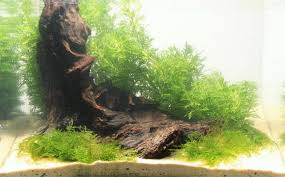How To Aquascape A Planted Tank Creating A Three Dimensional Layout With A Pronounced Sense Of