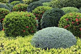 Bushes For Landscaping Learn About Landscaping Shrubs And Their Uses