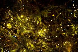 timely tree tips lights on trees ear to the ground by the dept
