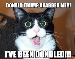 Donald Meme - lolcats donald trump lol at funny cat memes funny cat pictures