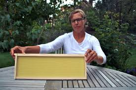 urban beekeeping thriving across minneapolis twin cities daily