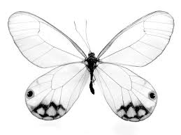 free printable butterfly coloring pages for kids for coloring pages draw butterflies jpg