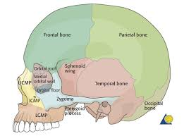 Base Of The Skull Anatomy Cranial Vault U0026 Skull Base Diagnosis Cranial Vault Cranial