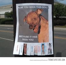 Sexy Dog Meme - have you seen this dog because it has seen you more awesome