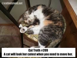 Funny Cat Birthday Meme - cat birthday meme cute cat 2018