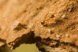 homeowner tips getting rid of ants leaves u0026 mold