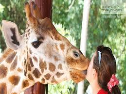 Ottoman Zoo Daily Sapanca Lake Masukiye Zoo Tour Turkey Tour