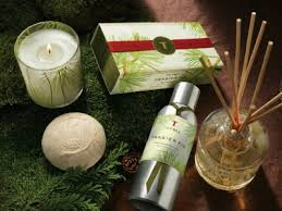thymes frasier fir the frasier fir scent from thymes o leary