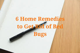 How To Kill Bed Bugs At Home 6 Home Remedies To Get Rid Of Bed Bugs Planet Orange