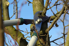 best time for pruning fruit trees how to prune a fruit tree tree