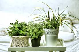 houseplants common houseplants for renters a pinterest roundup steve brown