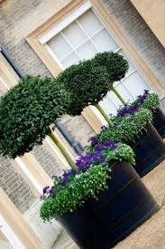 10 best images about landscaping designs on potted