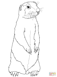 prairie dogs burrow homes in the ground coloring page free