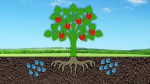 fruit tree garden layout starting an orchard all about fruit trees u0026 taking soil samples