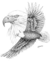 best 25 eagle sketch ideas on pinterest eagle drawing eagle