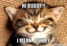 Cute Cat Meme Generator - mean cat meme generator best cat wallpaper 2018