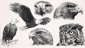 draw raptors birds of prey with step by step how to printouts