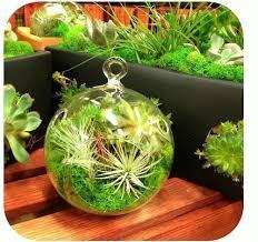 29 best terrarium images on glass ornaments