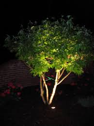 landscape lighting trees lights decoration