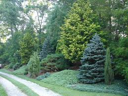 Backyard Privacy Landscaping Ideas by Surprising Small Backyard Landscaping Ideas For Privacy Pics