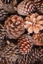 free photo decoration pine cones tap ornament nature pine max pixel