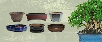 planting pots for sale bonsai tree bamboo plants indoor outdoor pots and tools