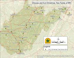find the perfect christmas tree at a choose and cut farm share