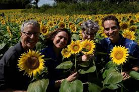 7 things to know about grinter farms u0027 sunflower fields 2017